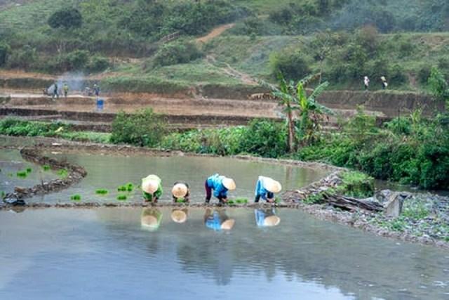 Les avantages et les inconvénients de l'aquaponie