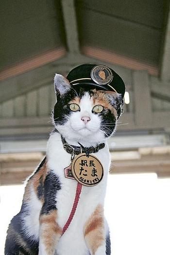 和歌山的貓站長 – 筲箕灣事變 Shau Kei Wan Incident