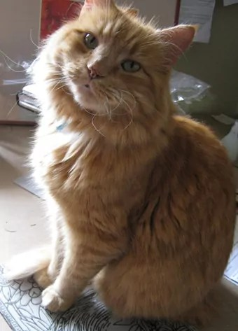 orange cat sitting on a lino block