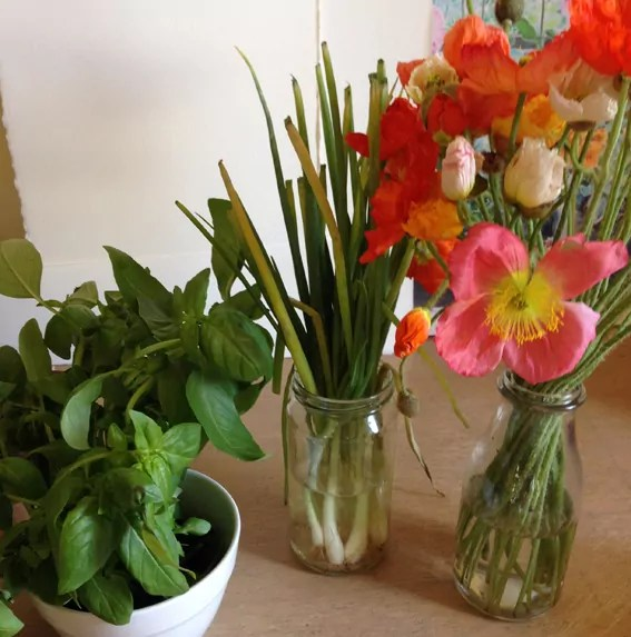 white bowl and glass jars holding basil, spring onions (in Summer) and blossoming poppies