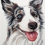 pet portrait of an Australian shepherd with one blue and one brown eye