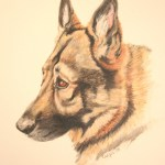 pet portrait of German Shepherd in acrylic paint