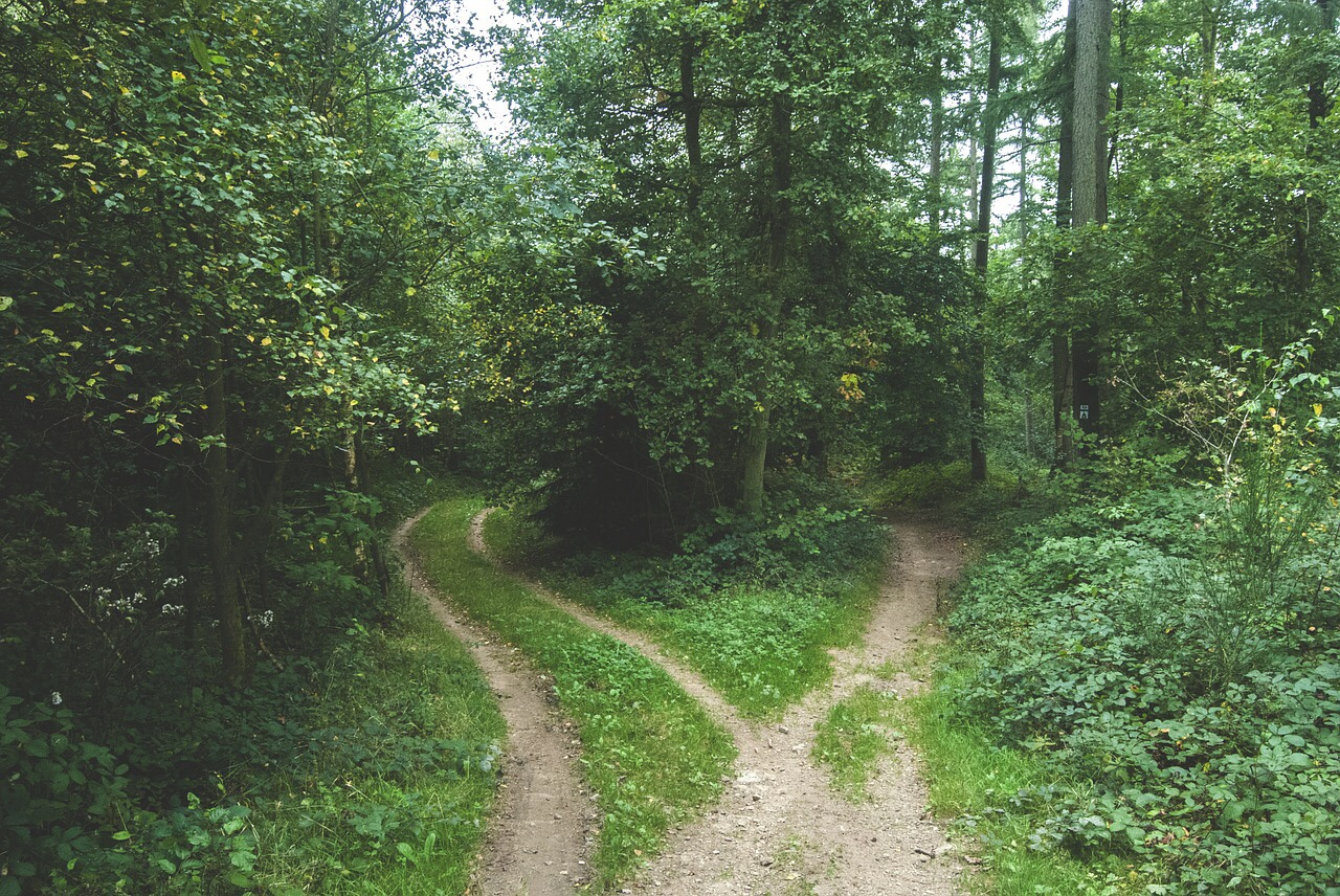 Choose the Path That Best Fits You – Will's Wisdom