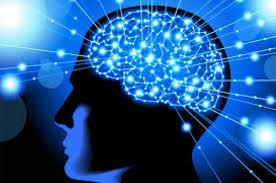Diet Terbaru untuk Kesehatan Otak Kita