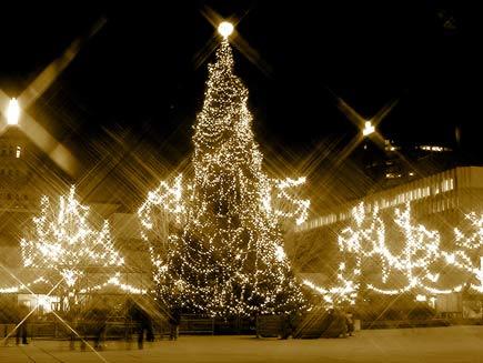Adanya Manfaat Sehat di Balik Teduhnya Pohon Natal