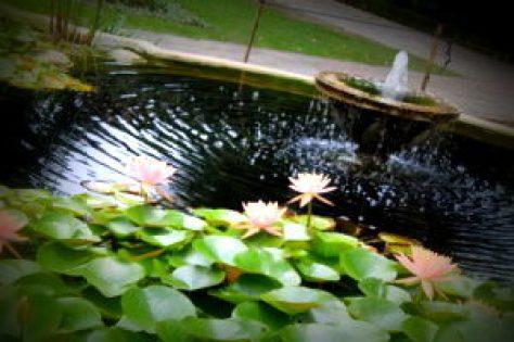 Flowers in Garden of dreams