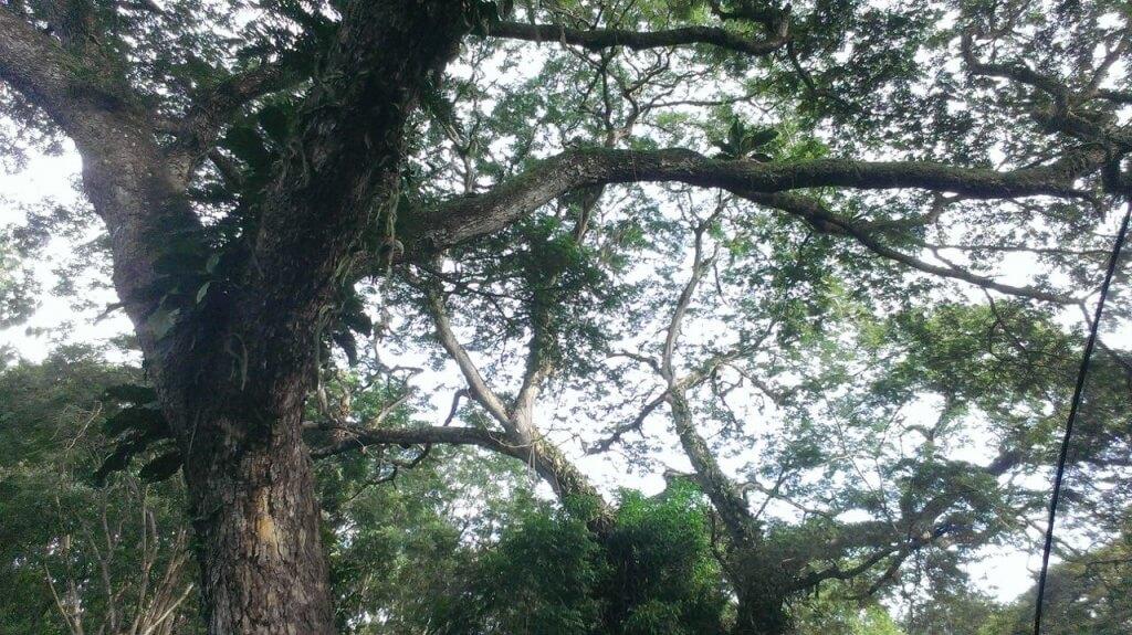 Costa Rica: enfermedad, pájaros y lluvia