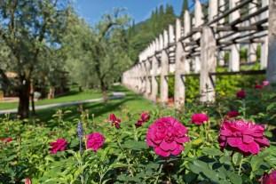 roses___limonaia