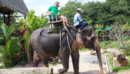 Elephant Ride Excursion