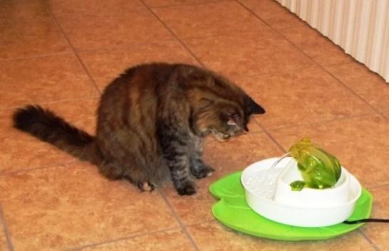 aug 1st cat