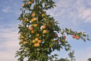 Appletree0912