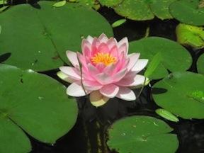 Asheville-Botanical-Garden-300x225