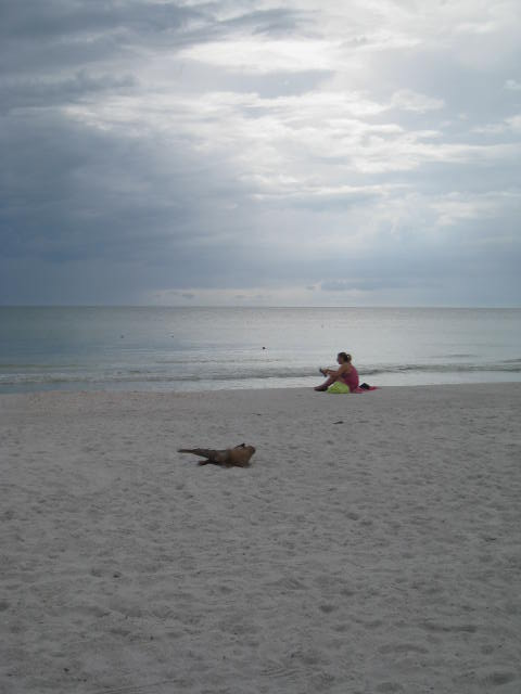 Gulf Coast Solitude