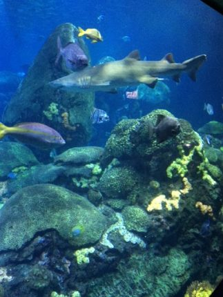 tn_aquarium_shark