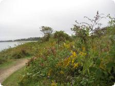 Cape Cod blooms