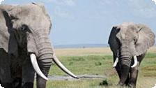 Wildlife on an African Safari Travel.