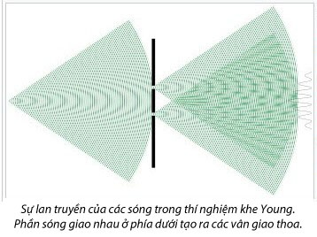 C:\Users\Tu Duc\Pictures\linh\young.jpg