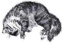 "Grafik ""Katze"" Gelschreiber, Papier"