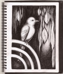 sketchbook bird book