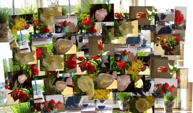 Dagens bilder som collage
