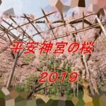 平安神宮の桜2019の見頃や開花状況は?ライトアップの期間や時間も調査!