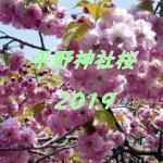 平野神社(京都)2019年の桜鑑賞は花見茶屋で!予約方法や楽しみ方も紹介!