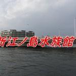 【2019】新江ノ島水族館のGWの混雑状況は?見どころや楽しみ方もご紹介!