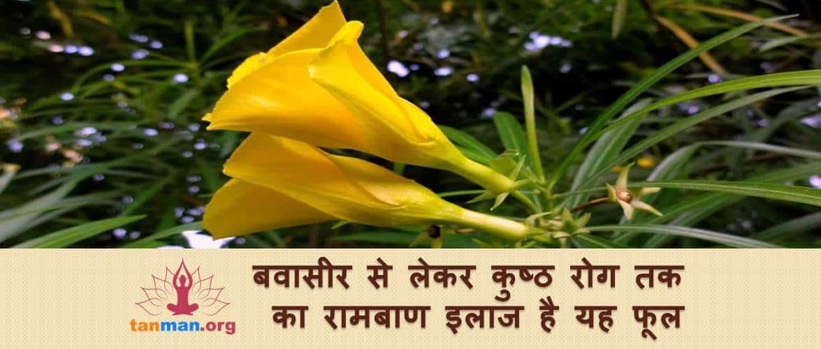 बवासीर से लेकर कुष्ठ रोग तक का रामबाण इलाज है यह फूल