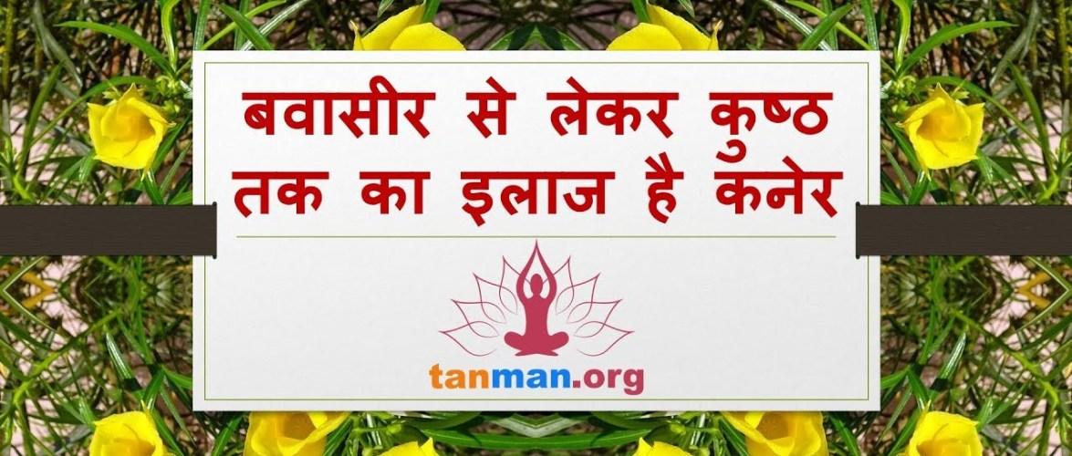बवासीर से लेकर कुष्ठ रोग तक का इलाज है कनेर