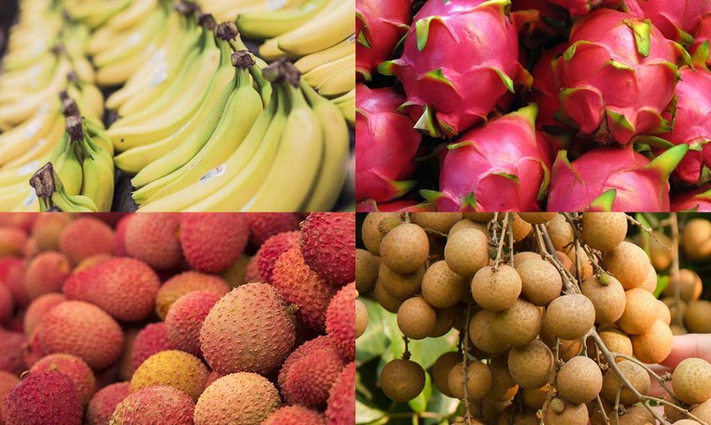 Vận chuyển trái cây tươi