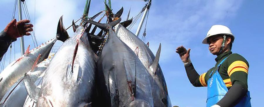 Miễn thuế cá ngừ đóng hộp sang EU