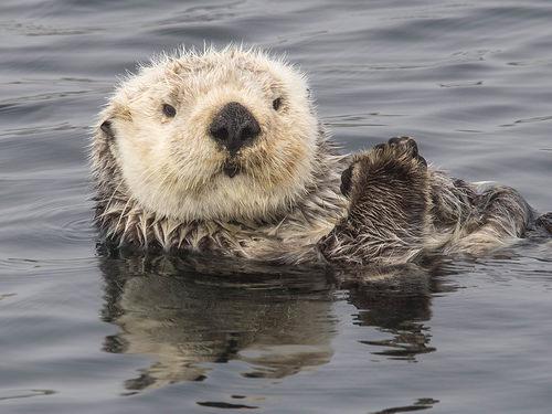 Otter photo
