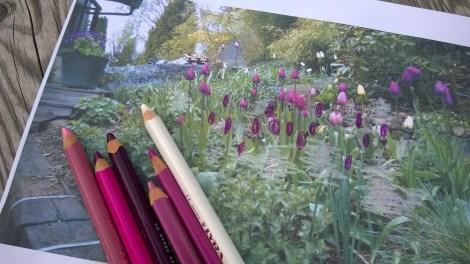 Planlegge neste års tulipaneblomstring