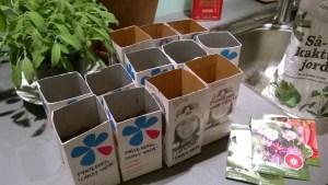 Forkultivering av frø i melkekartonger