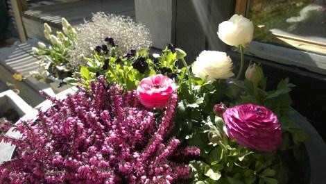 Krukke med vårblomster. Plantekombinasjoner. Sammenplanting