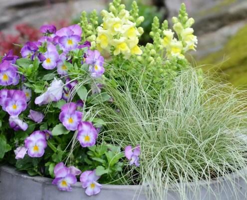 Betongkrukke med sommerblomster