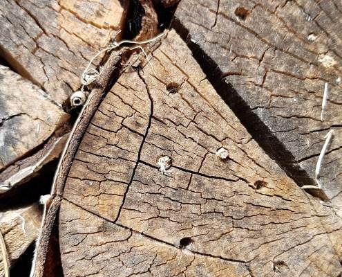 Insekthotell. Hulrom i vedkubber for veps og humle