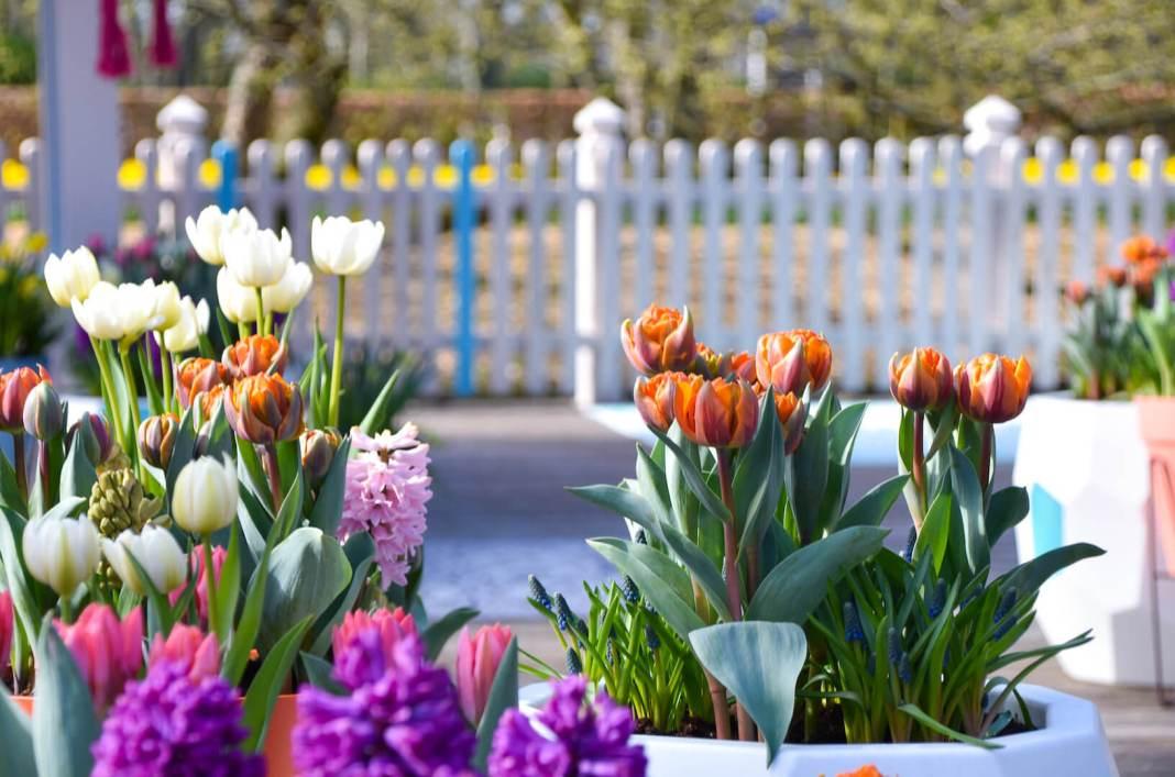 bloemen in verschillende kleuren