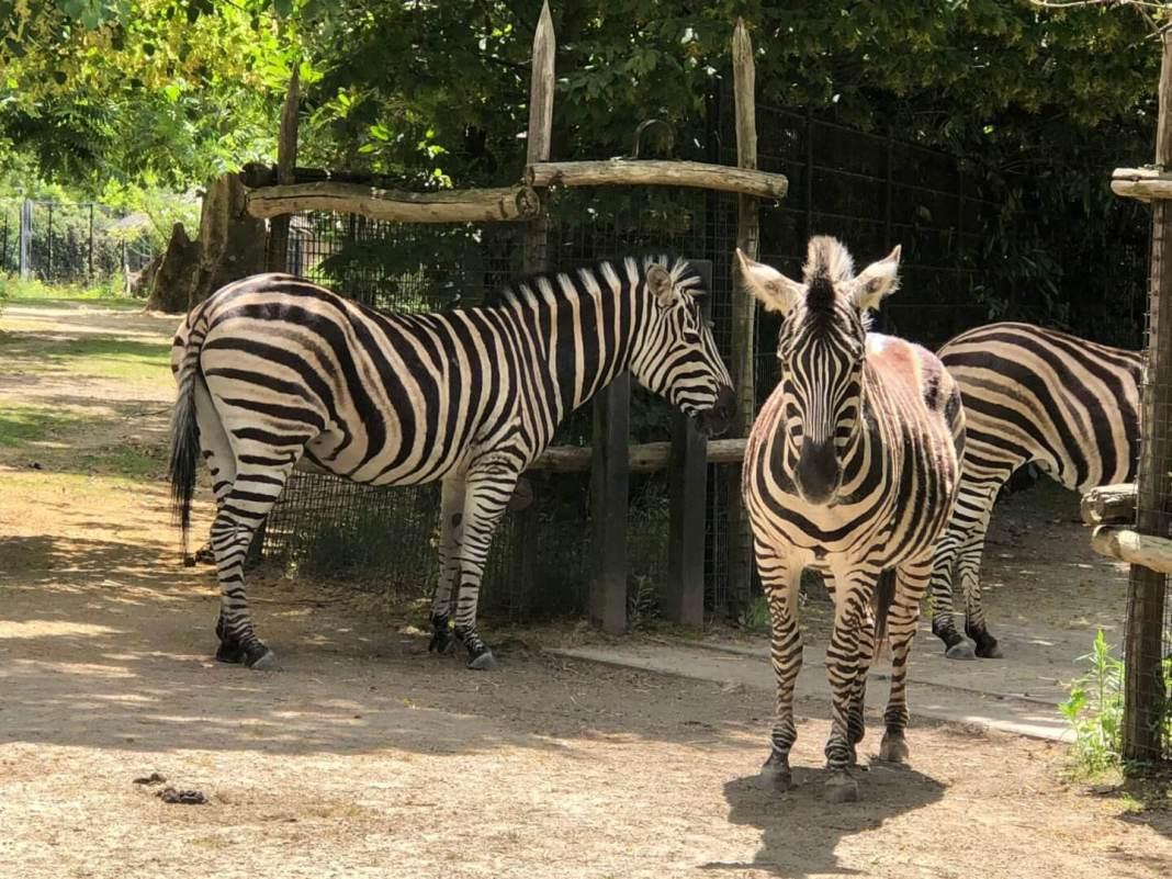 naar de dierentuin en naar de tandarts