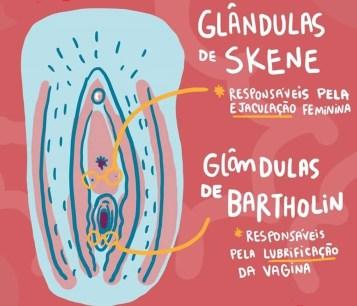 labios e glandulas