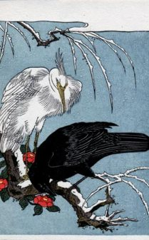 heron crow
