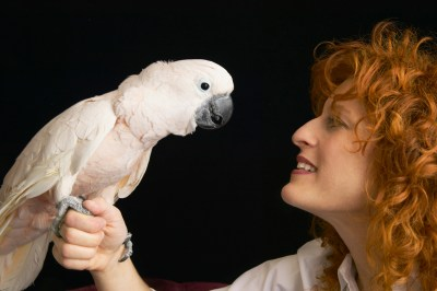 Parokeet and red headed woman face to face