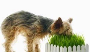 Anjing dan kucing makan rumput alasan tanya dokter hewan