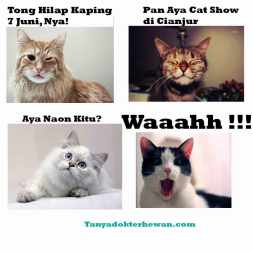 Kontes Kucing Cianjur Tanya Dokter Hewan