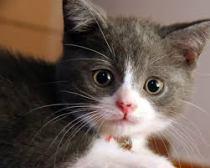 Kucing Ras Pedigree Non pedigree tanya Dokter Hewan