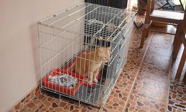Kapan saatnya Anjing dan Kucing Anda Perlu di Kandangkan?