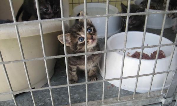 Kitten dalam kandang