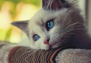 Banyak Pemilik Hewan Tidak Tahu, 5 Hal ini Ternyata Bisa Menyakiti Anjing dan Kucing