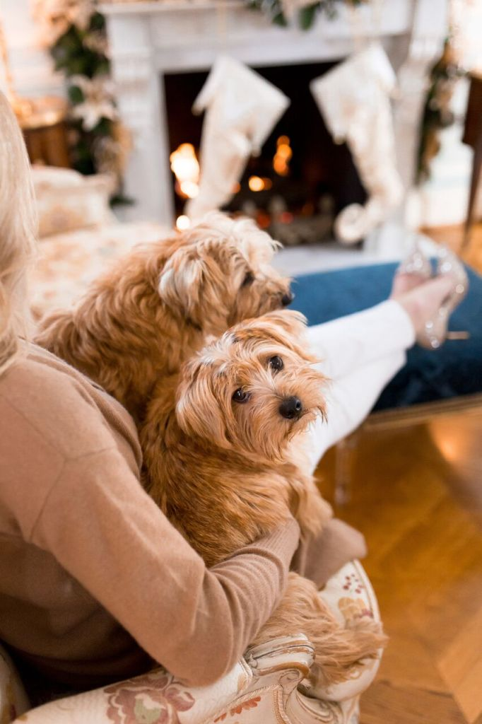 Tanya Foster with her Norfolk Terriers
