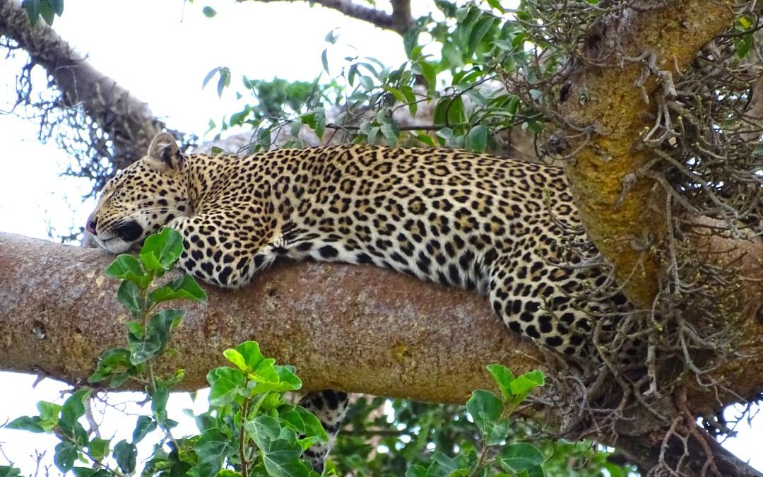 Tanzania: Your Guide to an Amazing African Safari in the Serengeti
